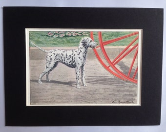 DALMATIAN spotty dog Louis Agassiz Fuertes Vintage Mounted 1919 plate print Congratulations Christmas Thanksgiving Birthday gift