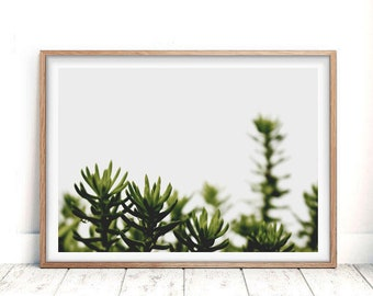 Succulent Print, Digital Download, Plant Print, Wall Decor, Minimalist Print, Succulent Art Print, Botanical Print, Botanical Art Print