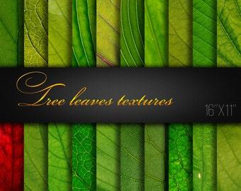 Tree Leaves Textures / Leaves Paper Pack / Leaves Scrapbook Paper / Tree Leaves Paper / Green Leaves / Leaves Digital Paper / Big pic/ Macro