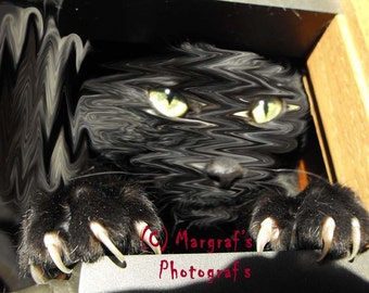 Black cat photography, 8x10 black cat art, surreal black cat pictures, called Alice's Cat. The cat black photos and images