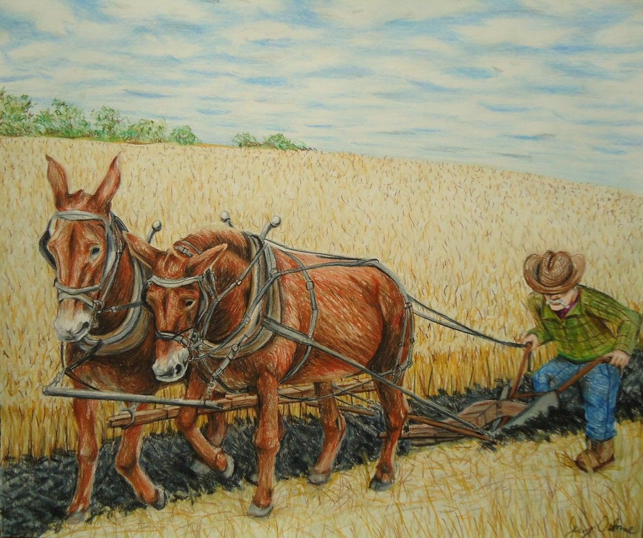 Original Mule pencil drawing Rustic home decor Farm