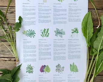 The Uncommon Guide...An illustrated guide to unusual edible greens. The LEAFY LEXICON art poster.