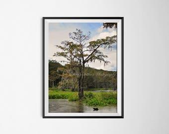 Tree photography print, nature inspired, Lakeview South Carolina, nature print, tree decor, living room decor, house warming gift, farmhouse