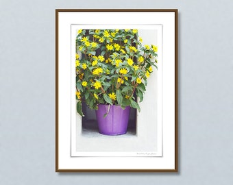 Original 30x40cm fine art photography, Sanvitalia giclee print, gardening gift, framed art prints, yellow flower, gardening art, home decor
