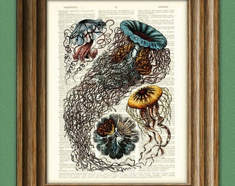 The Beautiful Jellyfish of the Ocean illustration upcycled dictionary page book art print