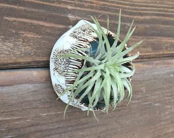 Medium Ceramic Wall Pod
