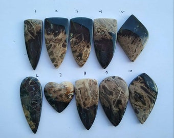 10 pcs Natural Petrified Fossil Palm Indonesian Stunning Cabs