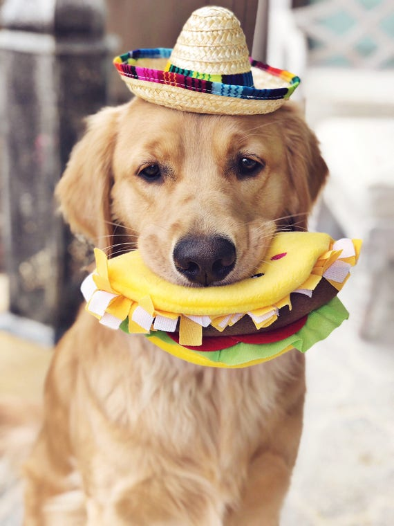 Mini Sombrero || Dog Hat || Straw Hat || Mini Sombrero ||  Fiesta Party || Fiesta Hat