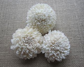 Sola Zinnia Flowers - Set of 12 - Natural Cream Color