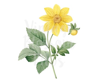 Yellow Flower Clipart for Invitations, scrapbook, Card making, collage, prints Digital Download - 1292