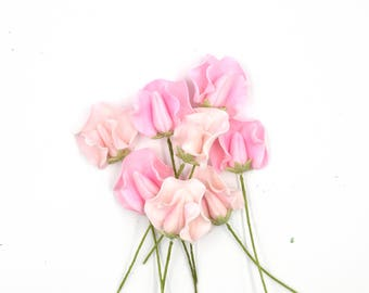 Pink Sweet Pea Sugar Flowers set of 8 for gumpate wedding cake toppers
