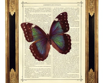 Butterfly Morpho Dictionary Ar Print Insect Poster Steampunk - Vintage Victorian Book Page Art Print