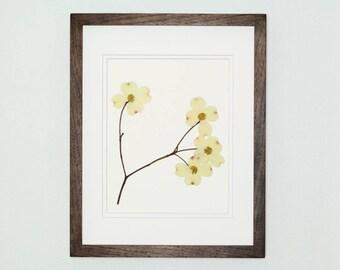 Botanical Art, Dogwood Print #104, Pressed Botanical Art Print, Fine Art Print, Wildflower Print, Pressed Flower Art, Botanical Wall Art