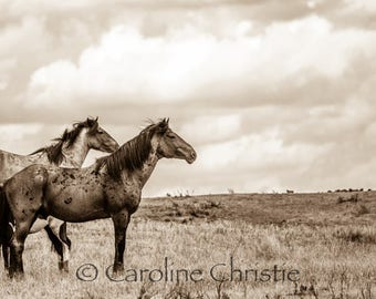 "Horse print,Wild Horse Photo, Horse Photography .Title "" On the range, part 1"""