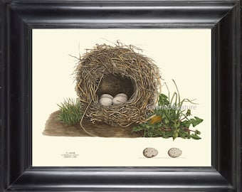 Bird Nest 18 Art Print 4x6 5x7 8x10 11x14 Beautiful Meadow Lark Bird Nest Eggs Antique Wildflowers Home Room Wall Decor Interior Design