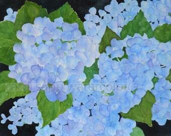 blue hydrangeas watercolor-hydrangeas painting-hydrangeas art-flower watercolor-flower painting-flower art-botanical watercolor
