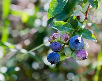 Blueberries Photography, Kitchen Photography, Food Fine Art, Cafe Decor, Blue Wall Art, Fruit Photo, Berry Print, Blueberries