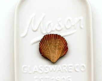 Sea Shell #12 Needle Minder
