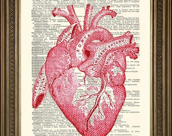 "HEART PRINT: Anatomical Human Organ, Vintage Red Biology Art Illustration on Antique Dictionary Page (size 8 x 10"")"