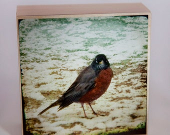 Red Beige Robin Photograph on Wood--Wrong Side of the Bed--4x4Fine Art