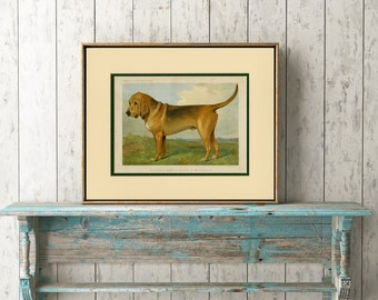 Bloodhound Art Print - Bloodhound Wall Art, Bloodhound Gift, Bloodhound Decor - Lithograph C.1881 Cassell's Book of the Dog 135 Years Old