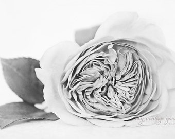 garden rose-b & w-flower photography -flower photo-cottage garden photography -  Original fine art photography prints - FREE Shipping