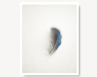 Modern farmhouse decor canvas art Feather photo print, nature photo, nature print, minimalist art, blue jay feather, feather photography,
