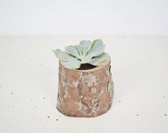 Pot natural wood trunk