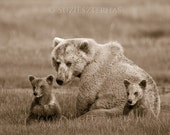 MOM and BABY BEARS Photo,...