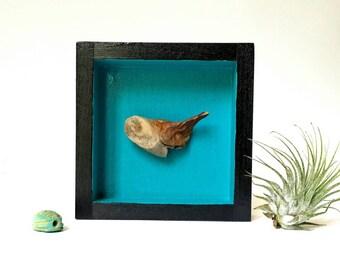 Kunst-Kasten, Kunstobjekt, Shadow-Box, Diorama Kiste, Holz Vitrine, kleine Skulptur, abstraktes Objekt, Kunst-Montage, Wohnkultur, Leuchtfarben
