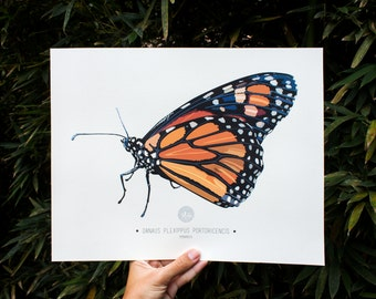 Monarch Butterfly Art Print Illustration