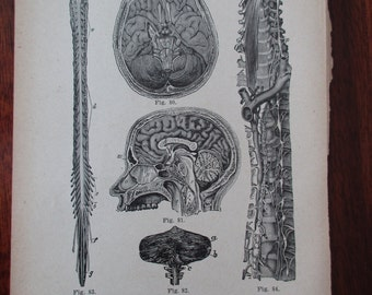 1800s MEDICAL CHART from antique medical book - brain