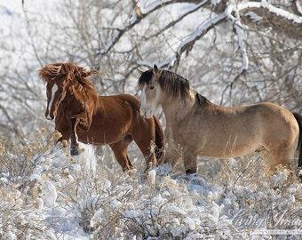 Two Stallion Friends - Fine Art Wild Horse Photograph - Wild Horse - Snow - Black Hills Wild Horse Sanctuary - Fine Art Print