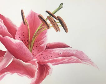 Watercolor Pink Stargazer Lilly (Original, Prints and Cards Available!)