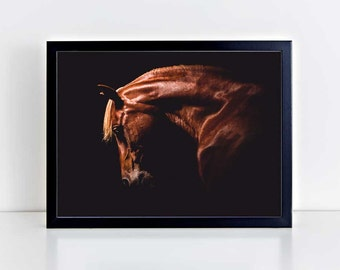 Horse Wall Art, Equine Print, Horse Photo, Horse Photography, Arabian Horse, Black Background, Equestrian Art, Horse Portrait