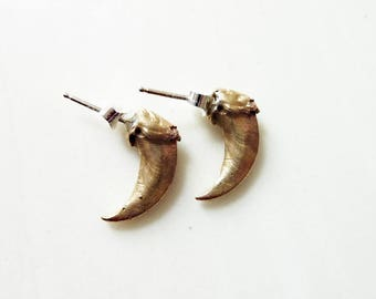 Coyote Claw Earrings, Solid Bronze, Sterling Silver, Lost Wax Cast, Post Stud, Animal, Nature, Native American, Totem