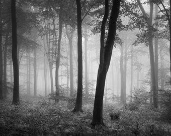 Autumn Woodland Mist - Black and White Photography