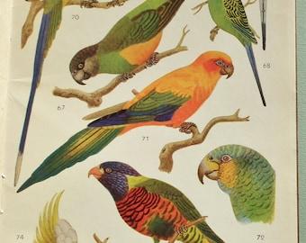 Petit Atlas des Oiseaux II L. Delapchier J. Berlioz 1954 vintage 1950s French language bird book colour plates nature wildlife ornithology