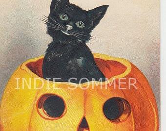 Digital download,  Cute Halloween Black Cat In Pumpkin, Jack o Lantern, Vintage Card Image,  Instant Download.