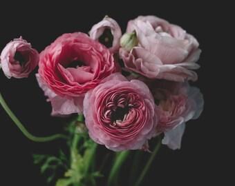 Ranunculus Photograph - Floral Still Life, Floral Art Print, Ranunculus Modern Home Dark Botanical Floral Photo Nature Still Life Print