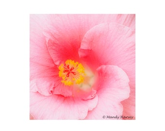 Pink Flower In Bloom, 8x8 photograph. Home Decor, Abstract, Fine Art, Wall Art