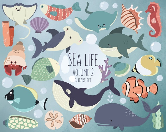 Sea Life Clipart Volume 2 Ocean Clip Art Set 24 Hi-Res