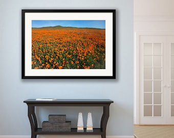 Poppy Photograph, California Flower Photo, Wildflower Canvas Gallery Wrap, Antelope Poppy Reserve, Large Nature Decor, Field Of Poppies Art