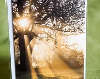 Original, greetings card, photograph, outdoors, landscape, Trees, Sunrise, Nonsuch Park, Surrey, Size A6