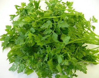 500 Chervil Curled HERB Seeds