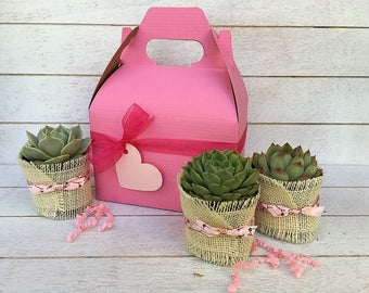 Plant Mom Gift-Teacher Succulent Gift-Pink Succulent Box-Garden in a Box-Plant Box-Gardener Gift-Thank You Gift-Birthday Day Gift
