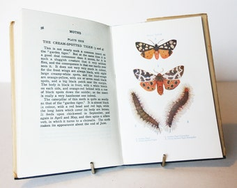 Butterflies And Moths Book - Colour plates Vintage Hardback 1900s old Natural History illustrated gift