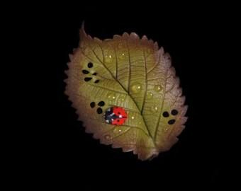 Bramble Leaf & Ladybird Brooch