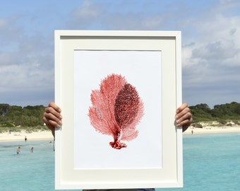 Red Fan coral Antique sealife Illustration - Wall decor Poster A3 Plus size  ,A3 Marine Poster - sea life poster SWC059A3P