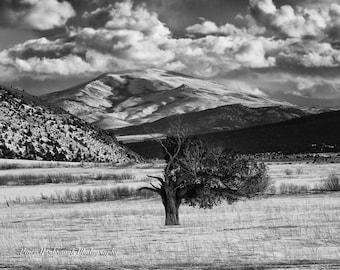 Old tree in snowy field